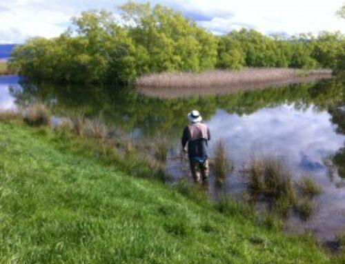 Short session on Brumbys Creek