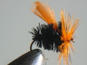 Great Lake beetle.